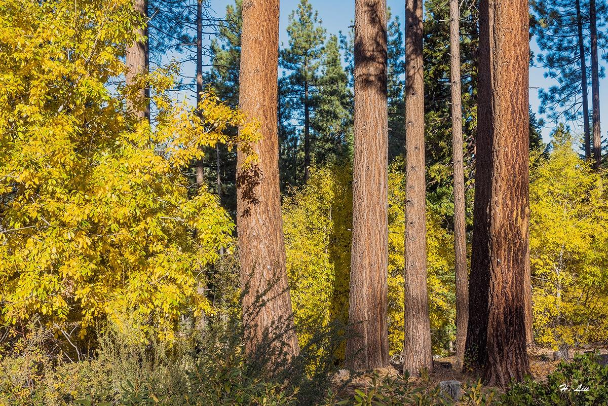 Tahoe_DSC1003.jpg