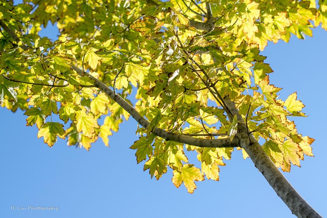 AutumnDSC_5398.jpg