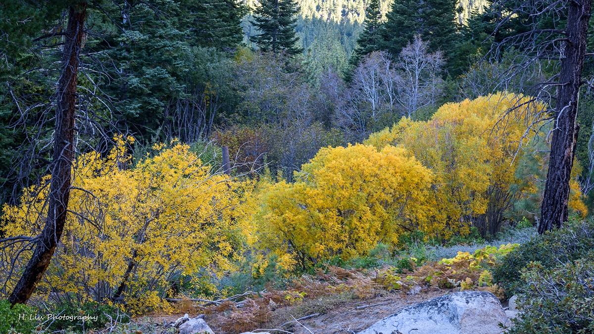 Tahoe_DSC0969.jpg