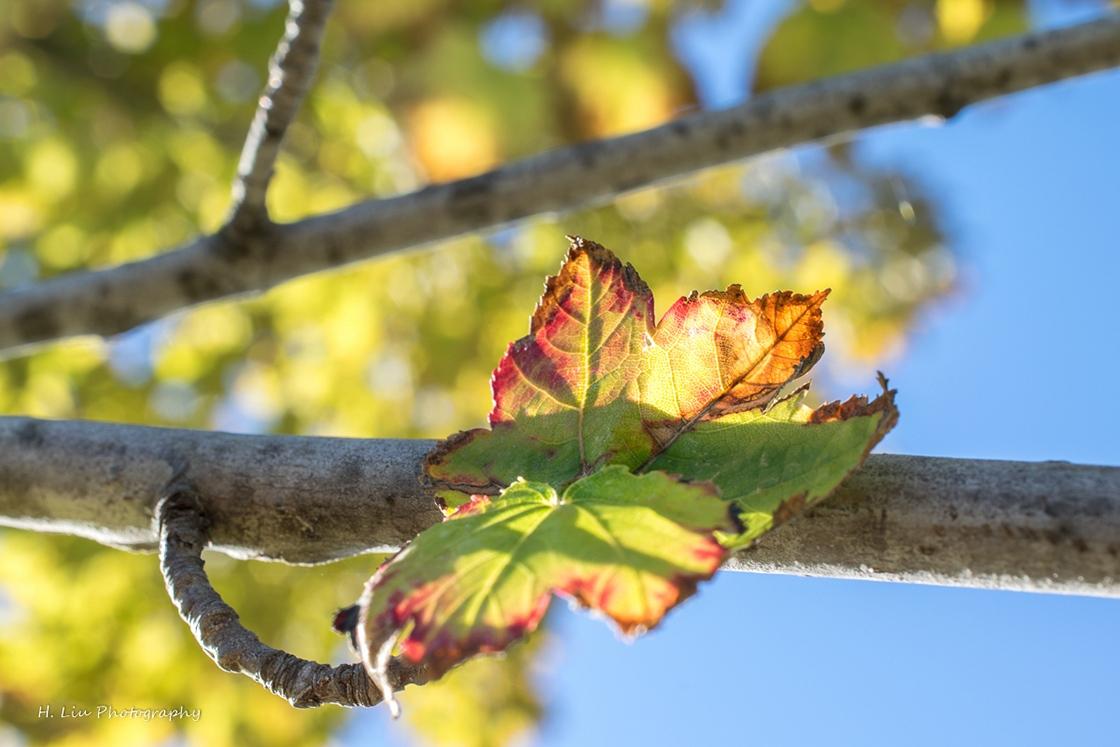 AutumnDSC_5406.jpg