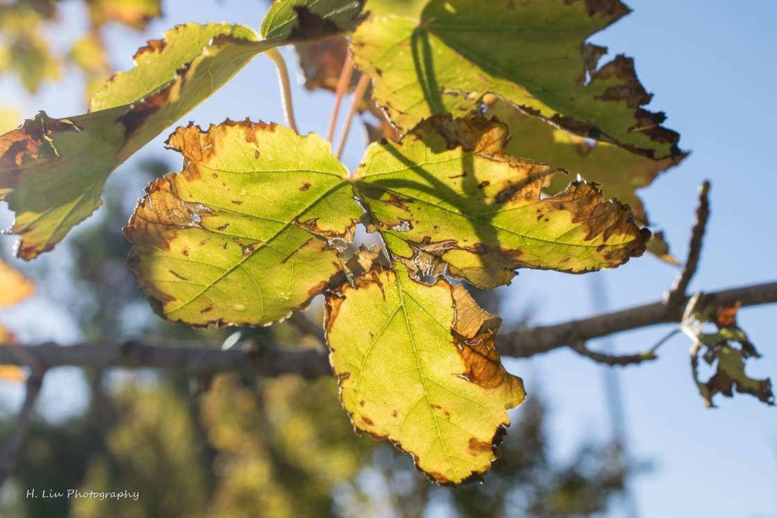 AutumnDSC_5404.jpg