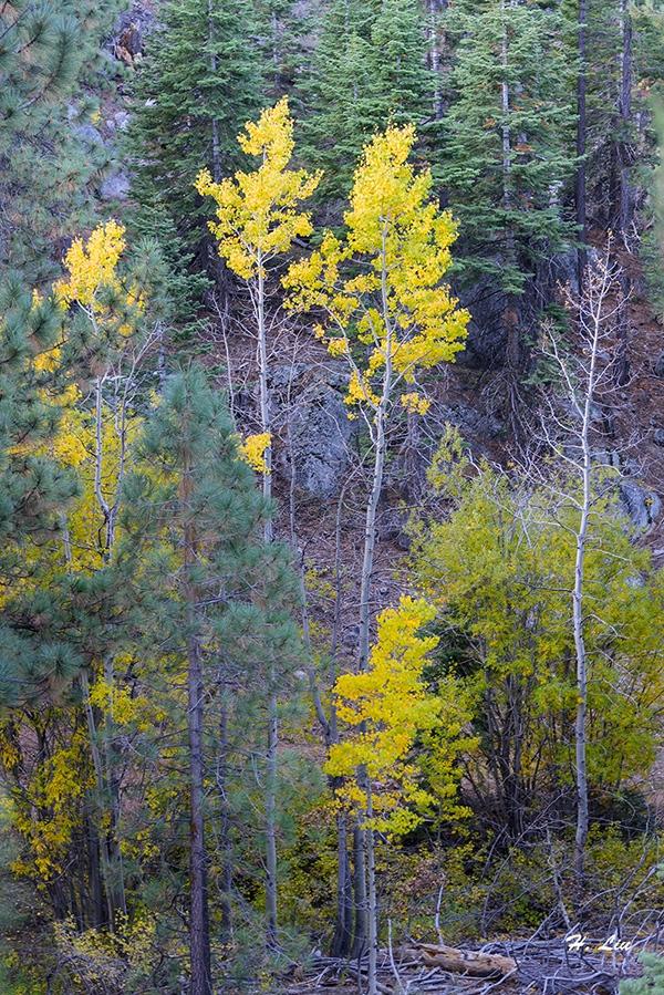 102217_Tahoe11.jpg