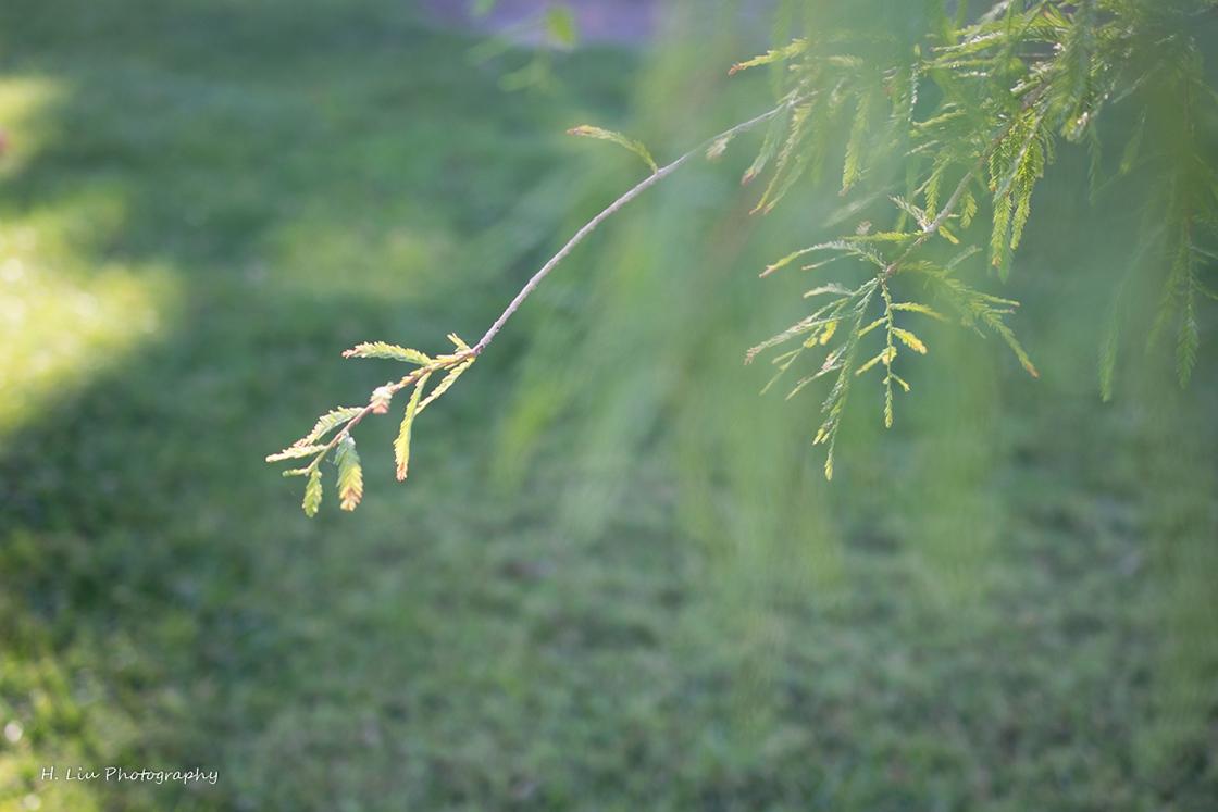 AutumnDSC_5396.jpg