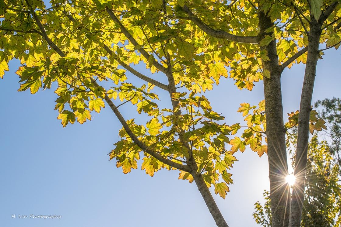 AutumnDSC_5402.jpg